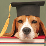 Hund mit Kopf auf Büchern