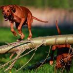 Hunde_jagd