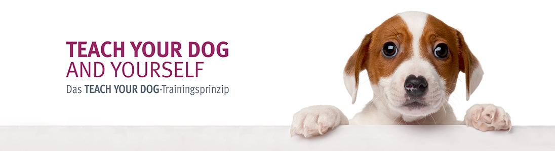 Teach Your Dog Berlin – Hundetraining